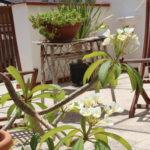 Soleggiata terrazza appartamento a Sferracavallo