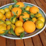 Les oranges de petit déjeuner frais siciliens à il Dammuso Palermo