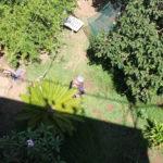 Vista del rigoglioso giardino dell'appartamento a Sferracavallo palermo