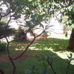 Il Dammuso Sferracavallo jardin avec des plantes de Pomelia