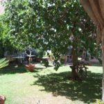 Le jardin typiquement sicilien de Dammuso Sferracavallo