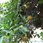 Mandarine pur petit dejenur Il Dammuso